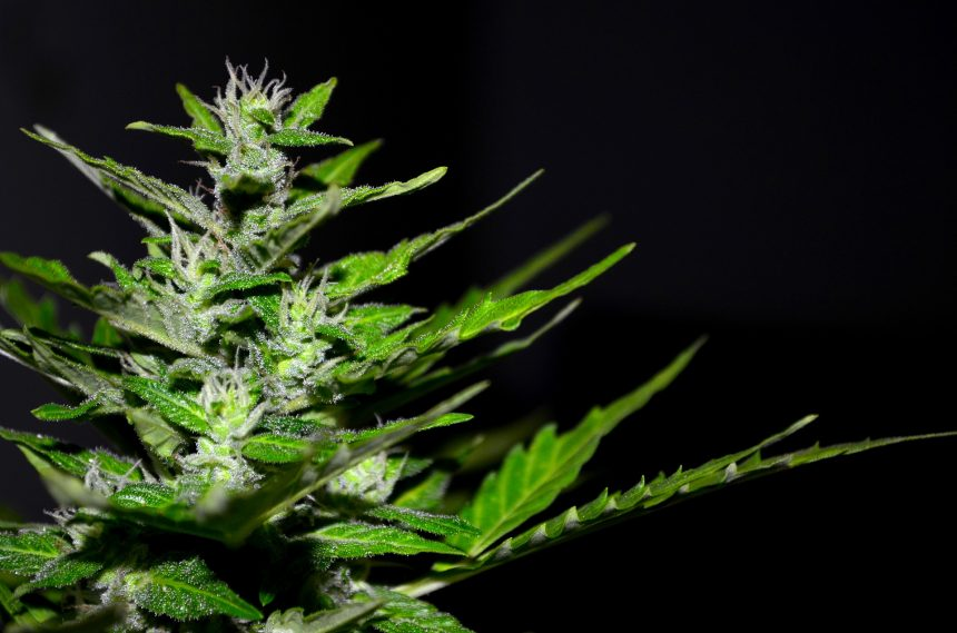 California's marijuana tax strategy